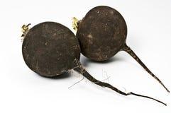 svart rädisa Royaltyfri Fotografi
