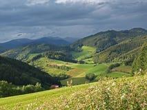 Svart skog Fotografering för Bildbyråer
