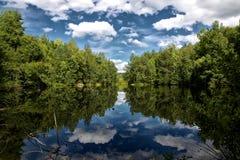 Svart skog Royaltyfri Foto