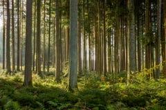 svart skog arkivfoto
