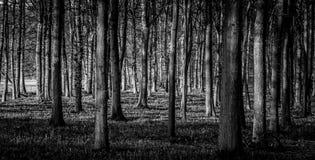 svart skog Royaltyfri Bild