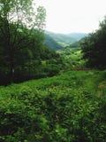 svart skog Royaltyfria Bilder