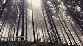 svart skog Arkivbild