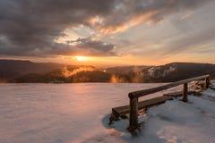 Svart skog för solnedgång Royaltyfria Bilder