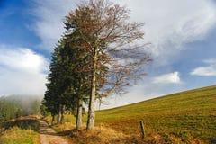 Svart skogvandringsled Fotografering för Bildbyråer