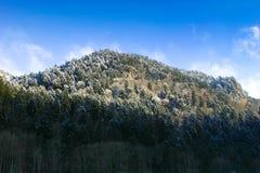 svart skogvinter Arkivfoto