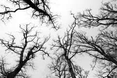 svart skogwhite Royaltyfri Bild