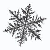 Svart snöflinga på vit bakgrund stock illustrationer