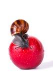 Svart snigel på det röda äpplet royaltyfri fotografi