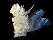 svart snowflower för bakgrund Royaltyfri Bild