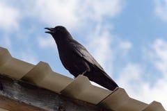 svart som är korpsvart på tak och blå himmel arkivfoto