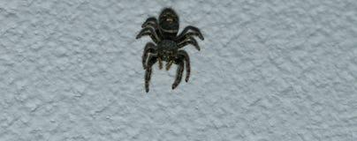 svart spindel Royaltyfri Bild