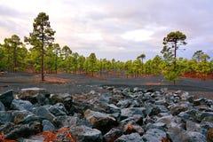 Svart stenspridning som ska göras grön, sörjer trädskogen fotografering för bildbyråer