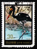 Svart stork, circa 1984 Royaltyfri Foto