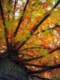 svart sun Royaltyfri Bild