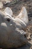 svart sunning för noshörning Arkivbild