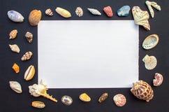 Svart tabell med vitbok- och havsskal Tomt papper med skaldjurramen Fotografering för Bildbyråer