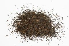 svart tea Royaltyfri Fotografi