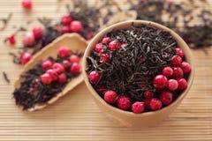 Svart tea lämnar med torra cranberries Arkivfoton