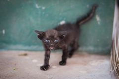 Svart tillfällig katt Royaltyfri Foto