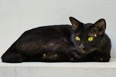 Svart tillfällig katt Arkivbild