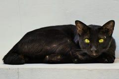 Svart tillfällig katt Fotografering för Bildbyråer