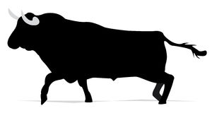 svart tjur Arkivbild