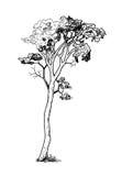 Svart träd för tappning Royaltyfria Foton