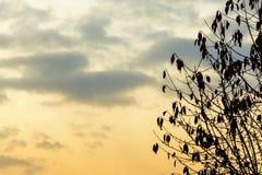 Svart trädkontur med solnedgång Arkivbilder