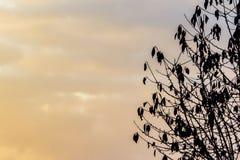 Svart trädkontur med solnedgång Arkivfoton