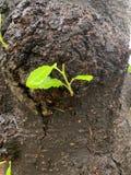Svart trädstam och grön tjänstledighetbakgrund royaltyfria bilder