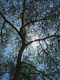 svart tree royaltyfria foton