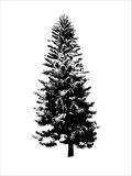 svart tree Fotografering för Bildbyråer