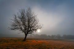 svart tree Arkivbilder