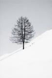 svart treewhite Arkivfoto