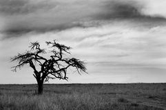 svart treewhite royaltyfri fotografi