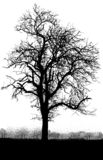 svart treewhite Arkivfoton