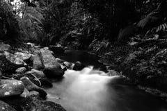 Svart tropisk flod med stora stenblock och frodig vegetation i svartvitt fotografering för bildbyråer