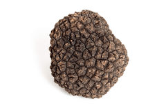 svart tryffel Royaltyfri Bild