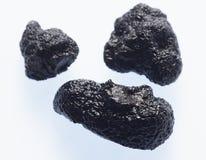 svart tryffel Fotografering för Bildbyråer