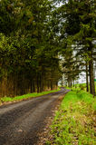 Svart väg i skog Royaltyfri Foto