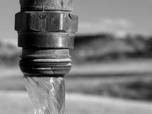 svart vattenkranwhite fotografering för bildbyråer