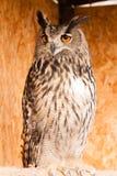 svart vektor för owl för färgpulver för teckningsörnillustration Royaltyfri Fotografi