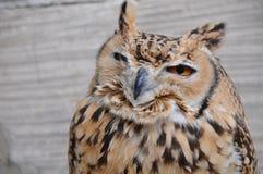svart vektor för owl för färgpulver för teckningsörnillustration Arkivbild