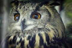 svart vektor för owl för färgpulver för teckningsörnillustration Arkivbilder