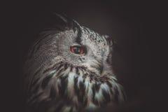 svart vektor för owl för färgpulver för teckningsörnillustration Arkivfoto