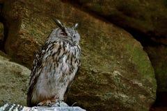 svart vektor för owl för färgpulver för teckningsörnillustration Fotografering för Bildbyråer