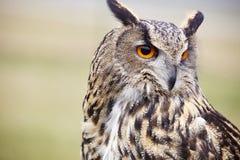 svart vektor för owl för färgpulver för teckningsörnillustration Arkivfoton
