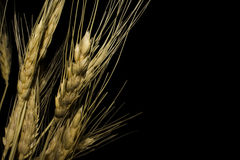 svart vete för bakgrund guld- filial Arkivbild