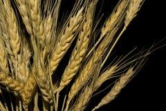 svart vete för bakgrund guld- filial Arkivfoton